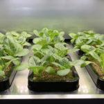 LG Evde Sebze Yetiştirmeyi Sağlayacak Ev İçi Bahçe Cihazı Tanıtacak